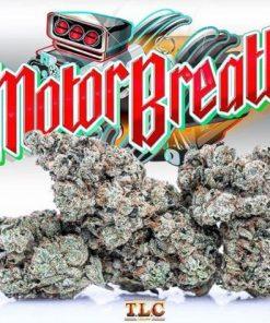 Buy Jungle Boys Motor Breath Online